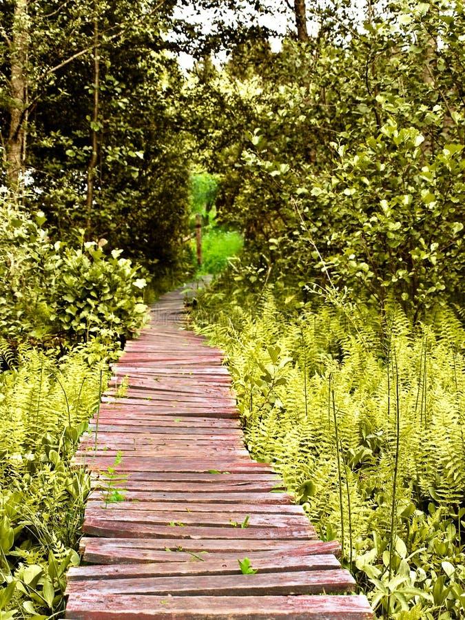 Estrada de madeira fotografia de stock