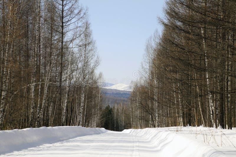 Estrada de madeira do inverno aos montes de montanhas de Sayan imagem de stock