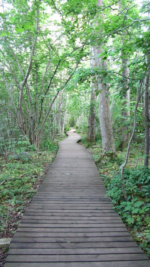 Estrada de Noruega de madeira fotos de stock