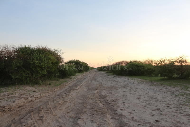 Estrada de Sandy no Bushveld africano fotos de stock