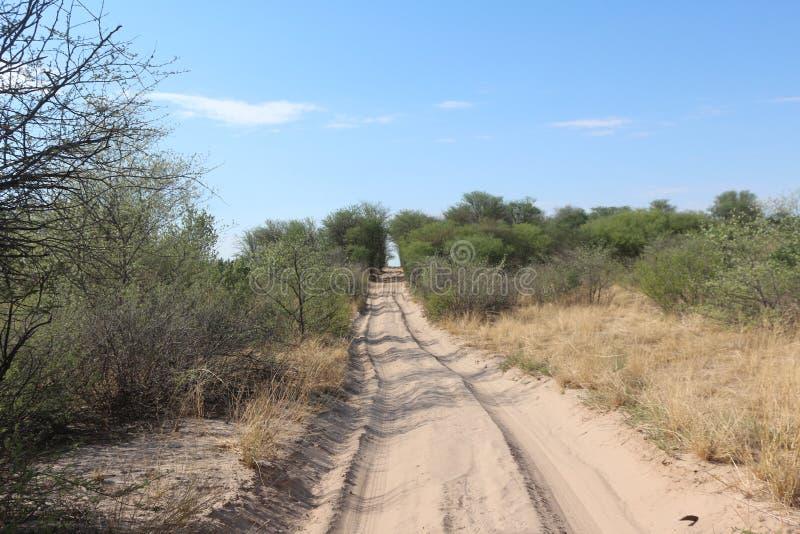 Estrada de Sandy no Bushveld africano fotografia de stock royalty free