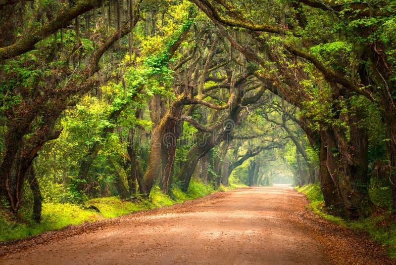 Estrada de terra alinhada árvore Lowcountry Charleston South Carolina imagem de stock