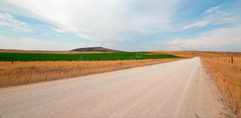 Estrada de terra ao lado do campo sem cortes da alfafa em Montana EUA imagem de stock