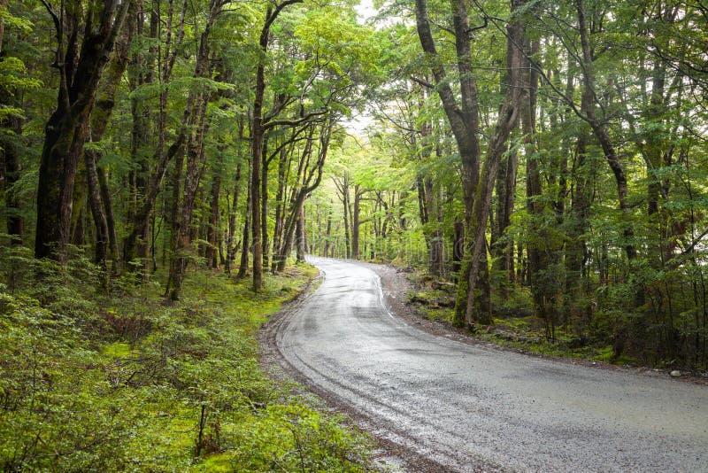 Estrada de terra através da floresta úmida em Nova Zelândia imagens de stock