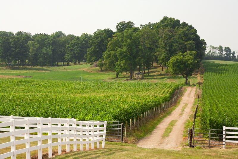 Estrada de terra e um campo de milho. fotografia de stock