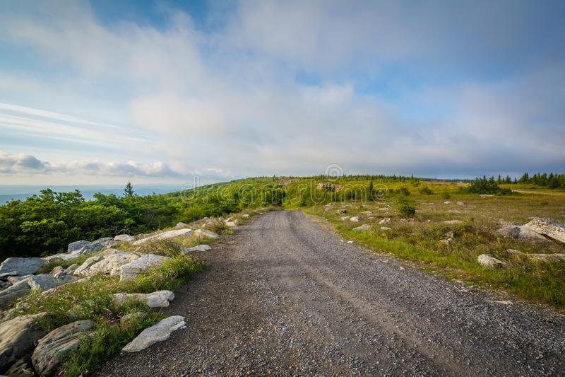 Estrada de terra em Dolly Sods Wilderness, floresta nacional de Monongahela, West Virginia fotos de stock royalty free