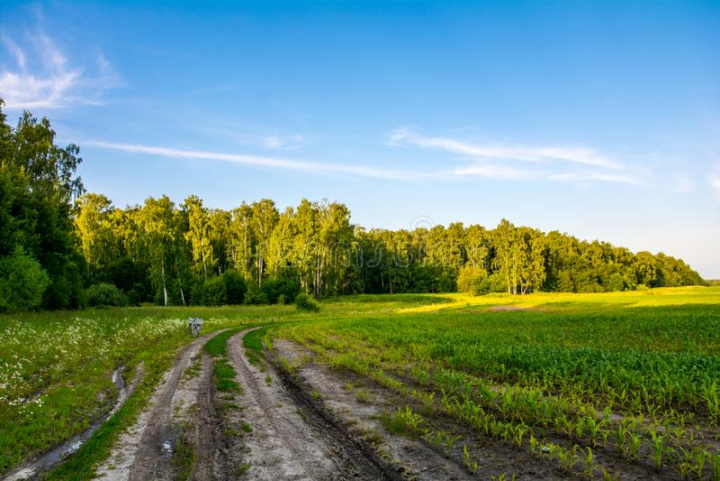 Estrada de terra na borda da floresta foto de stock