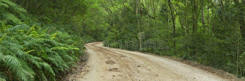 Estrada de terra na floresta úmida na rota NP do jardim, África do Sul imagens de stock royalty free