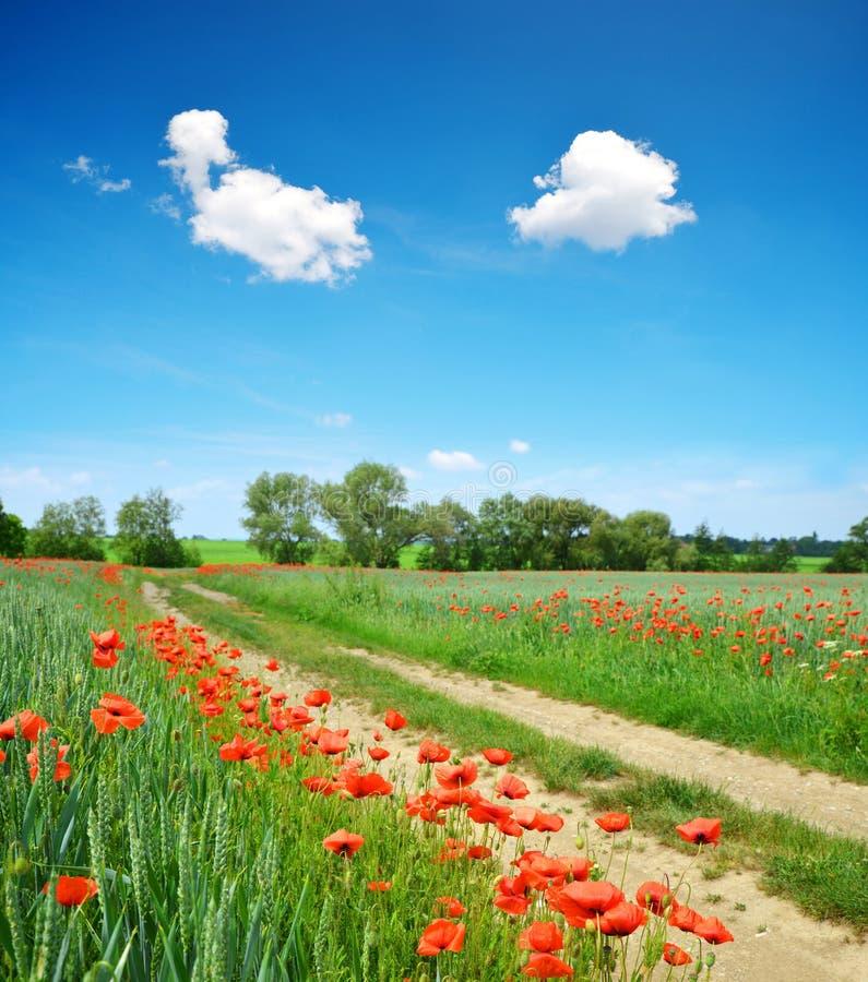 Estrada de terra na paisagem rural da mola com céu azul fotos de stock