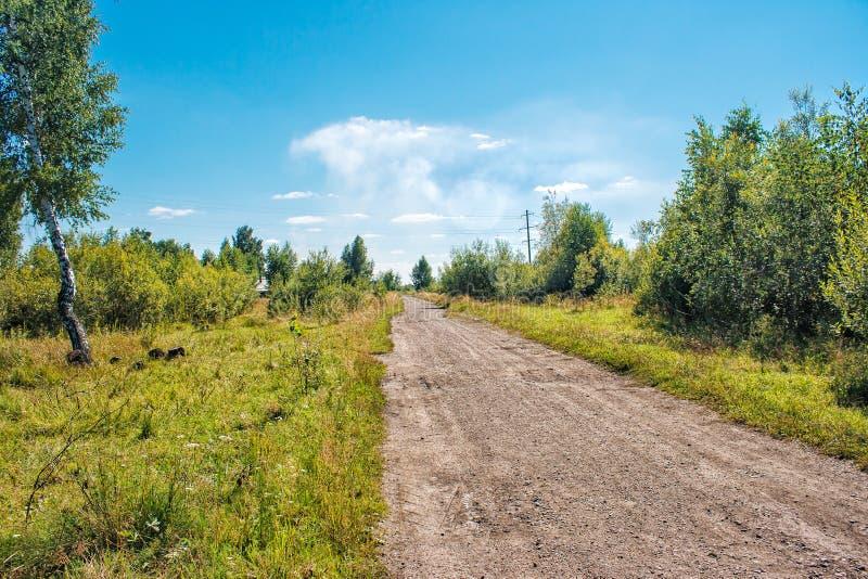 Estrada de terra nas madeiras fotos de stock royalty free