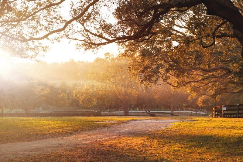 Estrada de terra no campo no por do sol fotografia de stock royalty free
