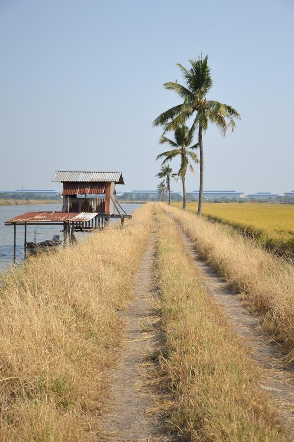 Estrada de terra no país Chachoengsao da natureza, Tailândia fotos de stock