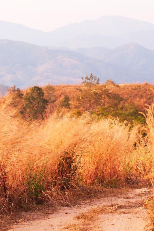 Estrada de terra pitoresca da montanha com as flores selvagens no crepúsculo imagens de stock