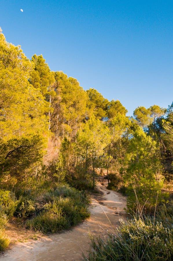Estrada de terra que cruza a montanha para a floresta cercada por árvores e por arbustos fotografia de stock