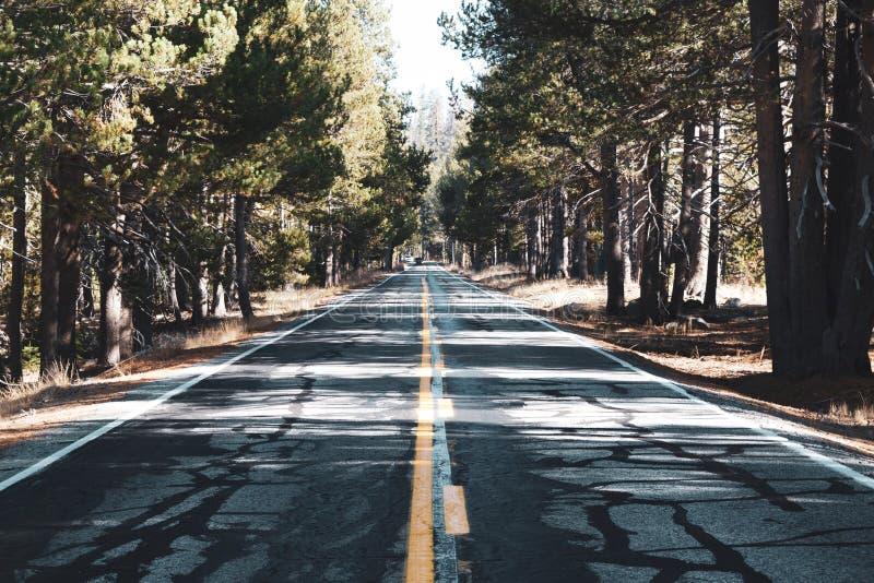 Estrada de Yosemite alinhada com árvores foto de stock