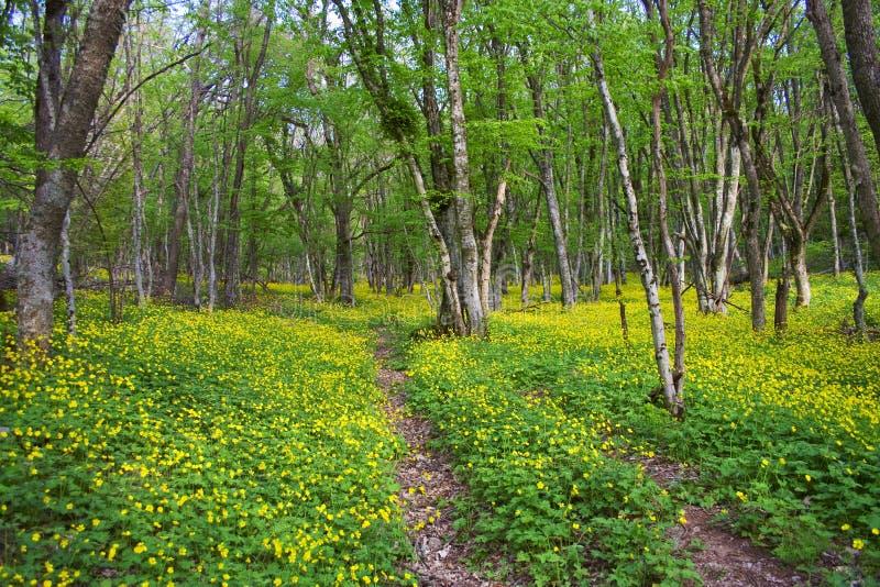 Download Estrada Na Floresta Da Mola Foto de Stock - Imagem de plantas, flor: 29847686