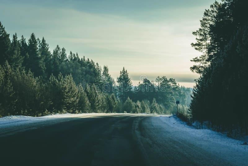 A estrada desaparece atrás da árvore bonita do zimbro na paisagem ensolarada e gelado do inverno imagem de stock royalty free