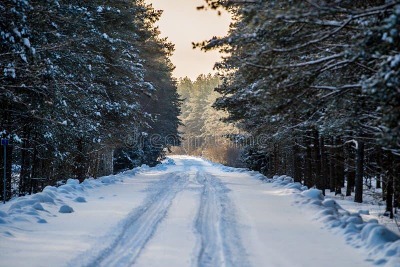 Estrada difícil perigosa na floresta do inverno fotos de stock