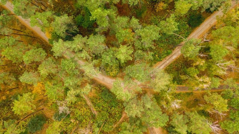 Estrada do campo entre as árvores da floresta do outono foto de stock royalty free