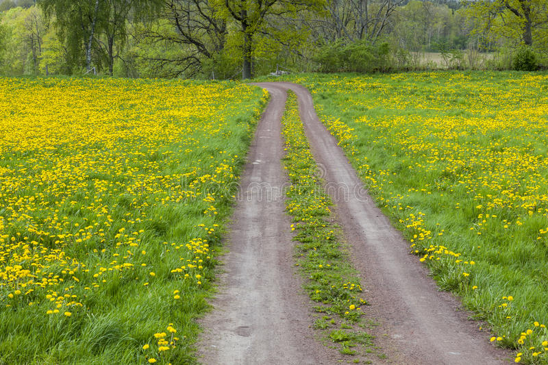 Estrada do cascalho em um prado fotos de stock