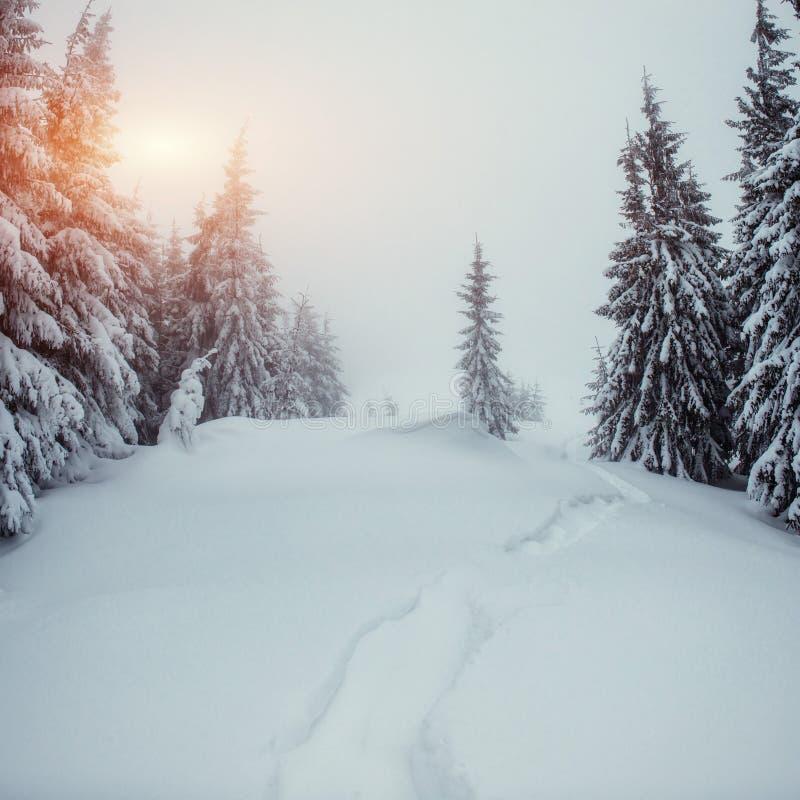 A estrada do inverno foto de stock royalty free