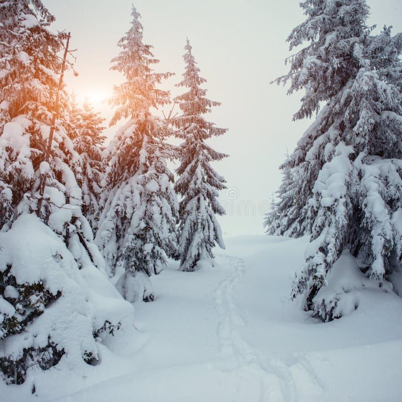 A estrada do inverno imagens de stock