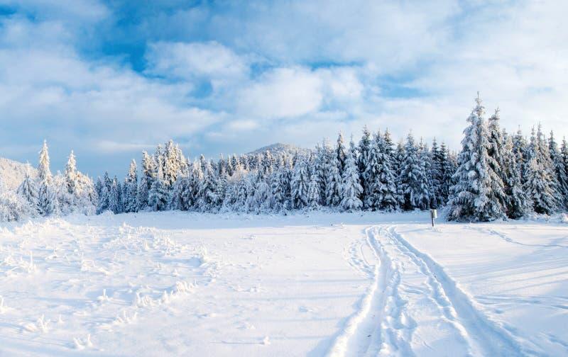 A estrada do inverno Cena dramática Carpathian, Ucrânia, Europa foto de stock royalty free