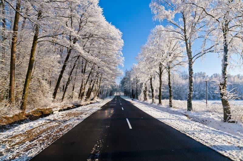 Estrada do inverno, conduzindo através da floresta nevado fotografia de stock royalty free