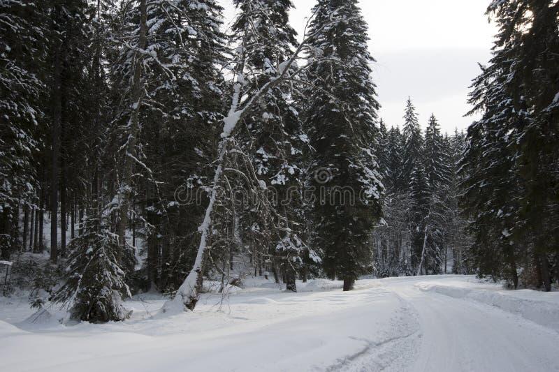 Estrada do inverno em uma floresta fotografia de stock royalty free