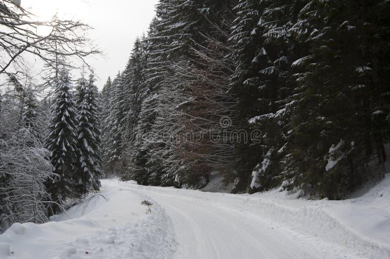 Estrada do inverno em uma floresta fotos de stock royalty free