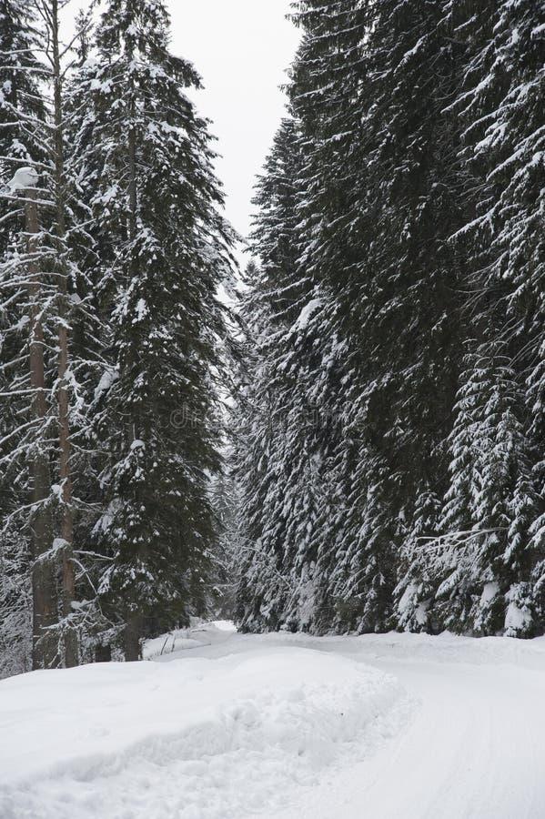 Estrada do inverno em uma floresta imagem de stock royalty free