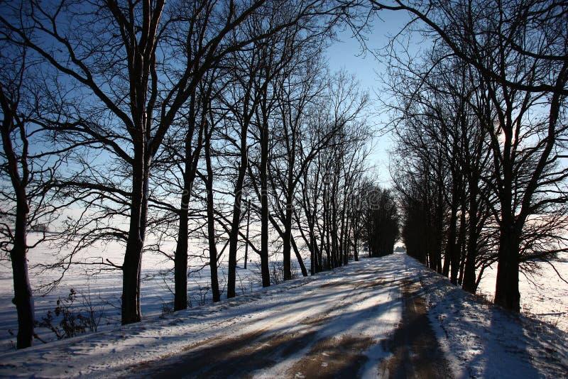 Estrada do inverno entre carvalhos imagem de stock royalty free