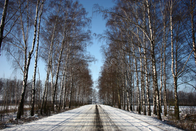 Estrada do inverno entre vidoeiros fotografia de stock