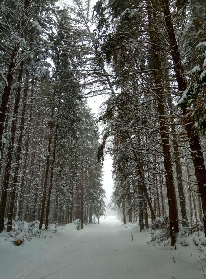 Estrada do inverno na floresta conífera nevado para o papel de parede do fundo dos esquiadores foto de stock royalty free