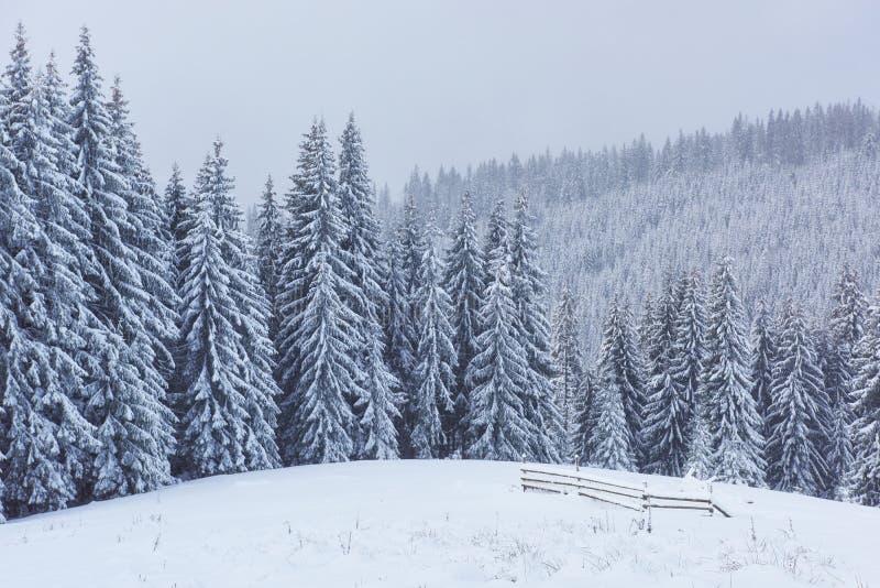 A estrada do inverno nas montanhas Cena dramática Ucrânia Carpathian Europa imagens de stock royalty free