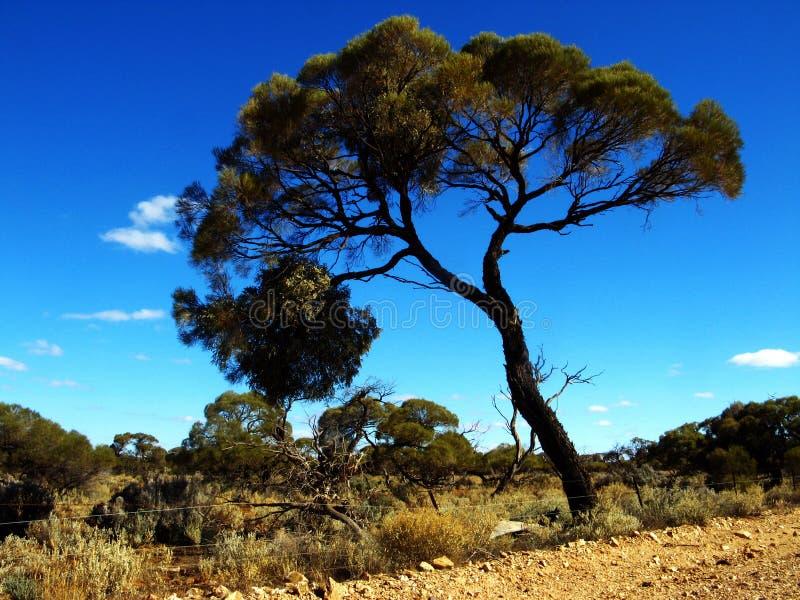 Estrada do oceano da árvore fotografia de stock