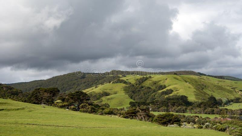 Estrada do oceano do campo típico grande, Austrália imagem de stock