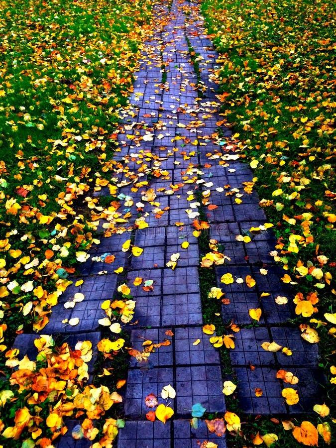 Estrada do outono foto de stock royalty free