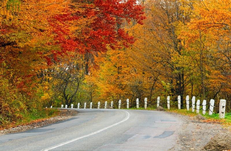 Estrada do outono na floresta fotografia de stock royalty free