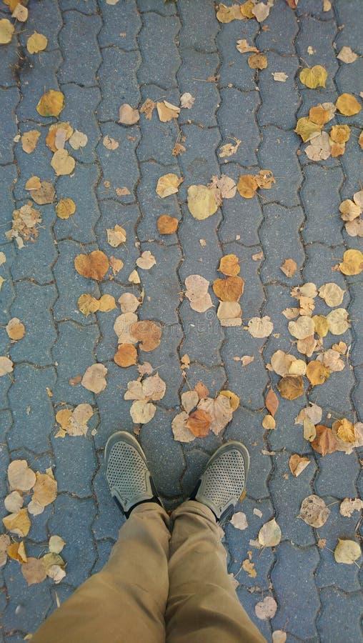 Estrada do outono Sidewalk, folhas amarelas, pernas Via Autumn City fotografia de stock