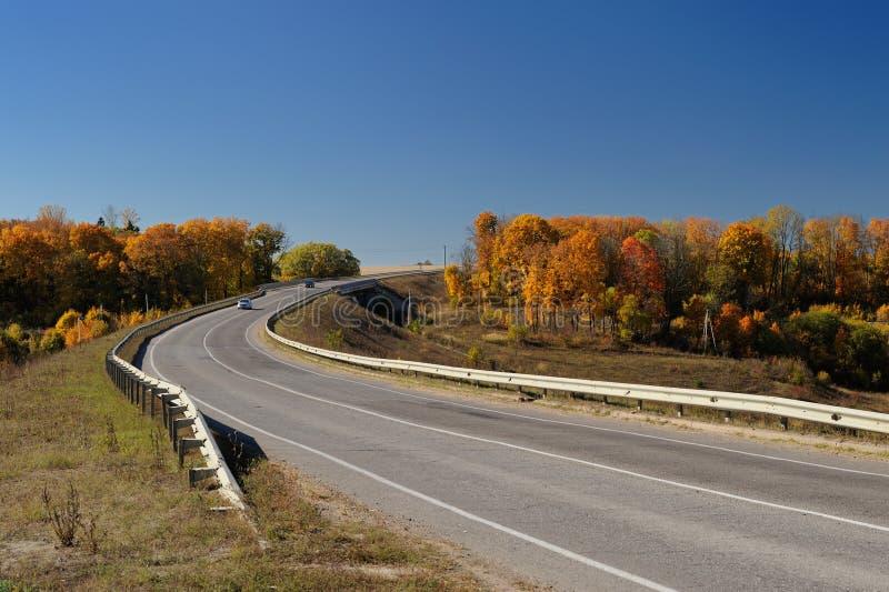 Estrada e árvores sós no outono fotos de stock