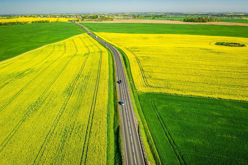 Estrada e campos amarelos da violação no dia ensolarado, vista aérea imagem de stock royalty free