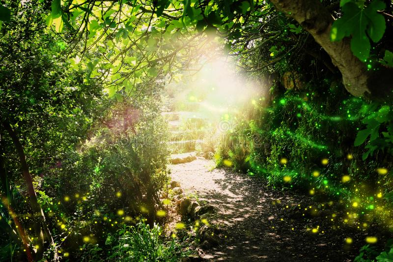 Estrada e escadas de pedra na floresta escura m?gica e misteriosa com luz m?stico e vaga-lume do sol Conceito do conto de fadas ilustração stock