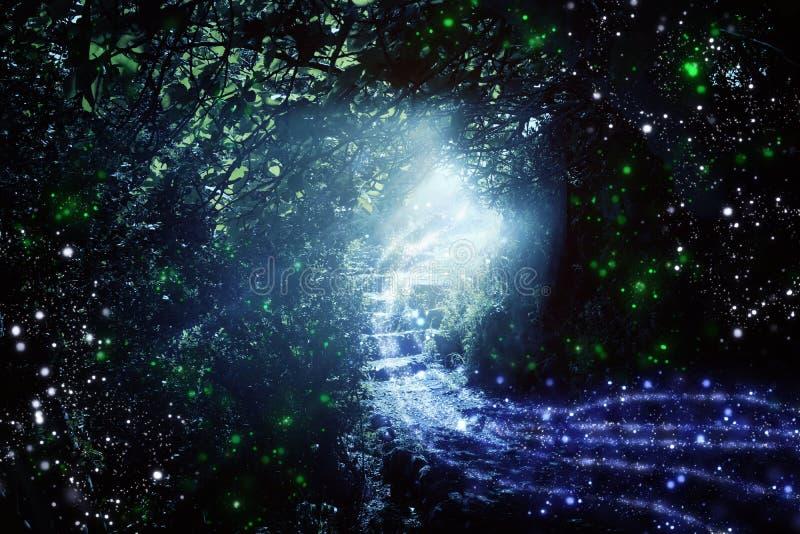 Estrada e escadas de pedra na floresta escura m?gica e misteriosa com luz m?stico e vaga-lume do sol Conceito do conto de fadas ilustração do vetor