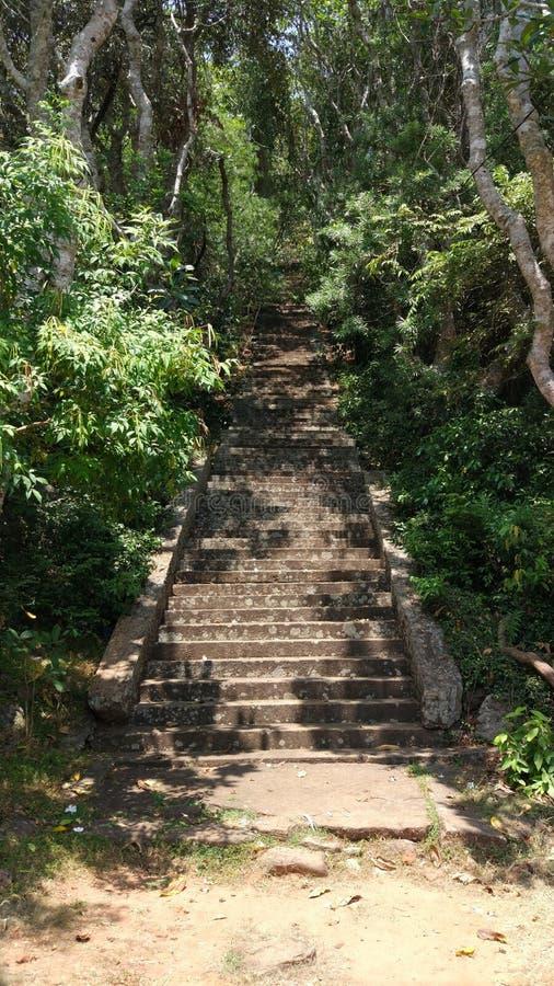 Estrada e floresta do templo da caverna de Dambulla foto de stock