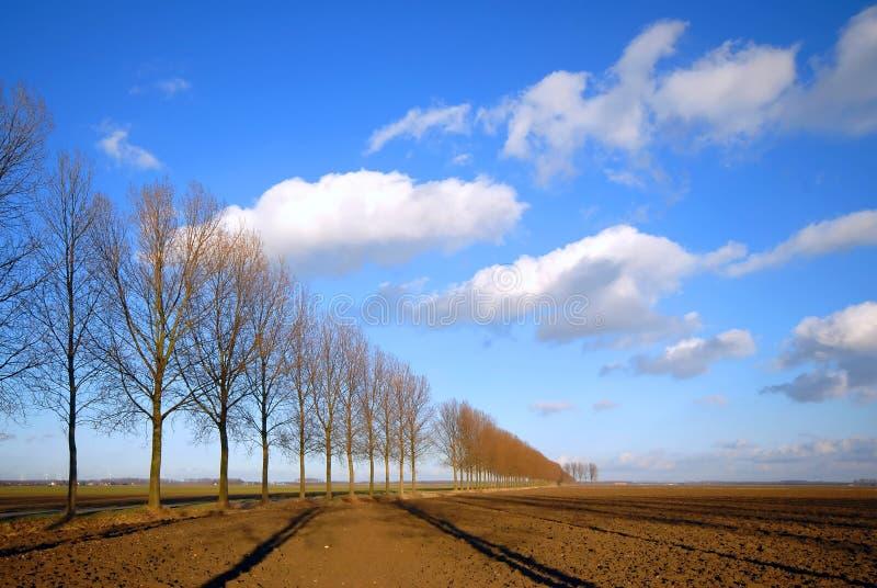Estrada e linha de árvores fotografia de stock