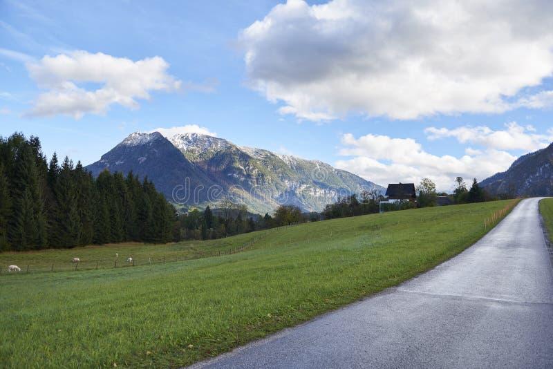 Estrada e montanhas em um dia ensolarado Ajardine com um campo verde e os cumes do austríaco Áustria, Gschwandt fotos de stock