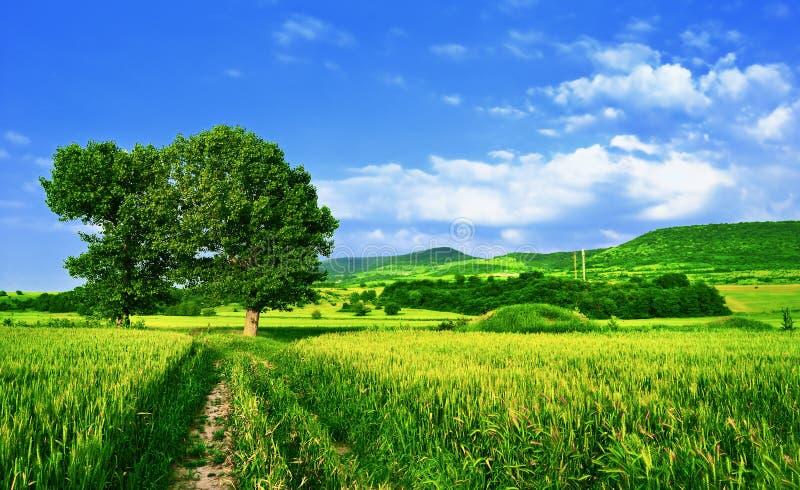 Estrada em campos verdes fotos de stock royalty free