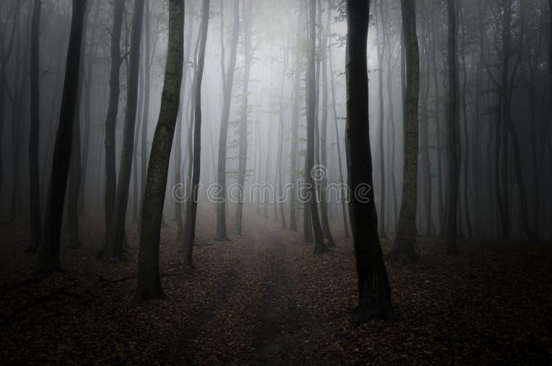 Estrada em madeiras escuras com névoa imagens de stock