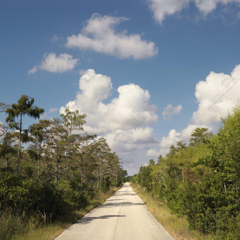 Estrada em marismas de Florida. fotos de stock royalty free